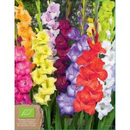 Kardvirág Mix - 100% BIO Virághagyma