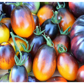 'Indigo Kumquat' Paradicsom