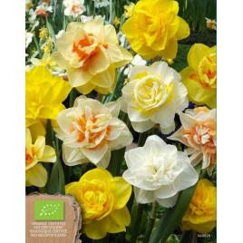 Teltvirágú Nárcisz MIX - 100% BIO Virághagyma