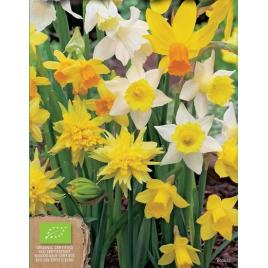 Botanikai Nárcisz MIX - 100% BIO Virághagyma