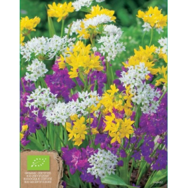 Unifolium&Moly Díszhagyma MIX - 100% BIO Virághagyma