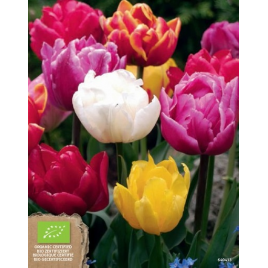 Teltvirágú Tulipán MIX - 100% BIO Virághagyma
