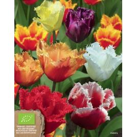 Rojtos Tulipán MIX - 100% BIO Virághagyma