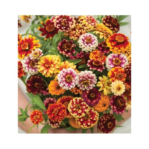Rézvirág - Jazz Mix
