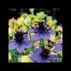 Virágmag Kollekció - Azúr MIX
