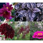 Virágmag Kollekció - Bíbor MIX