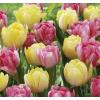 Foxtrot Tulipán Virághagyma Mix