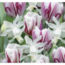 Rózsaszín / Fehér Tulipán - Nárcisz Mix