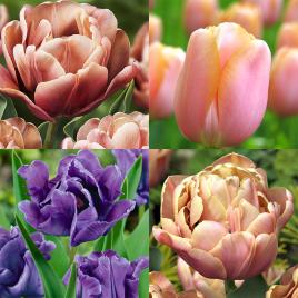La Belle Epoque - Tulipán Kollekció