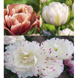 Pasztell Peony - Tulipán Kollekció