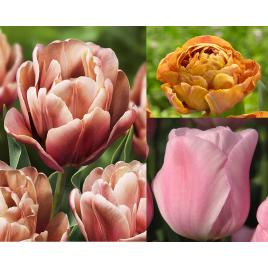 Mézes Álom - Tulipán Kollekció