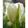 Tavaszi Frissítő - Tulipán Kollekció
