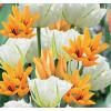 Napfürdő Tulipán Mix
