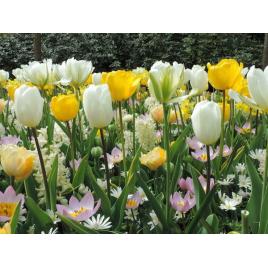 Fenséges Virághagyma Kombináció (100db/m2)