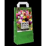 100Nap virágzás - Dália Mix