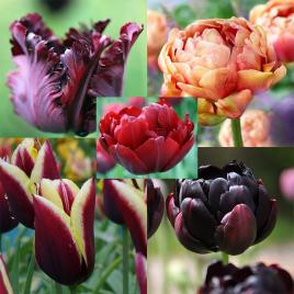 Madame - Tulipán Kollekció