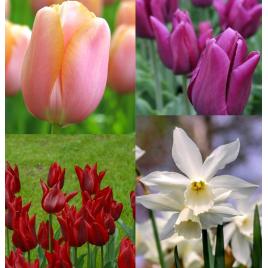 Kedvenc - Tulipán Kollekció
