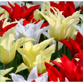 Stílusos Fesztivál Tulipán Mix