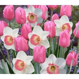 Pink Nárcisz - Tulipán Mix