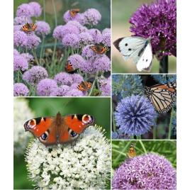 """""""Pillangók kedvence"""" Kollekció"""