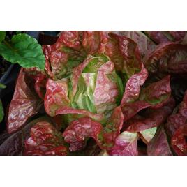 Négyévszak saláta
