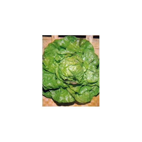 Trocadero Saláta
