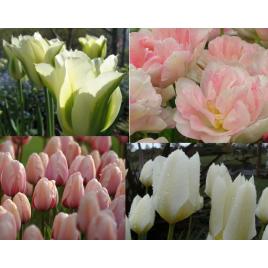 Pasztel Színek Tavaszra - Tulipán Kollekció