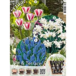 Tavaszi Válogatás - Virághagyma Lasagne
