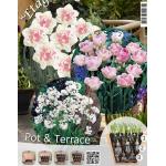 Rózsás Válogatás - Virághagyma Lasagne