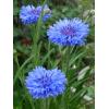 Búzavirág - Kék Herceg