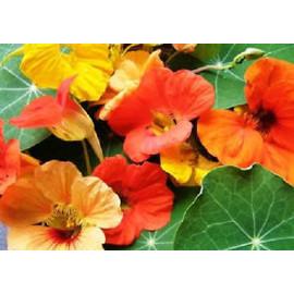 Virágmagok