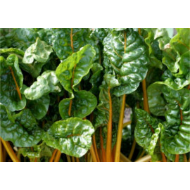 Zöldségmagok